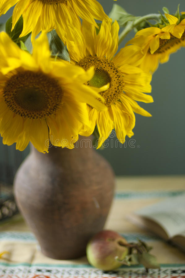 Ramo de girasoles hermosos en un florero fotografía de archivo libre de regalías