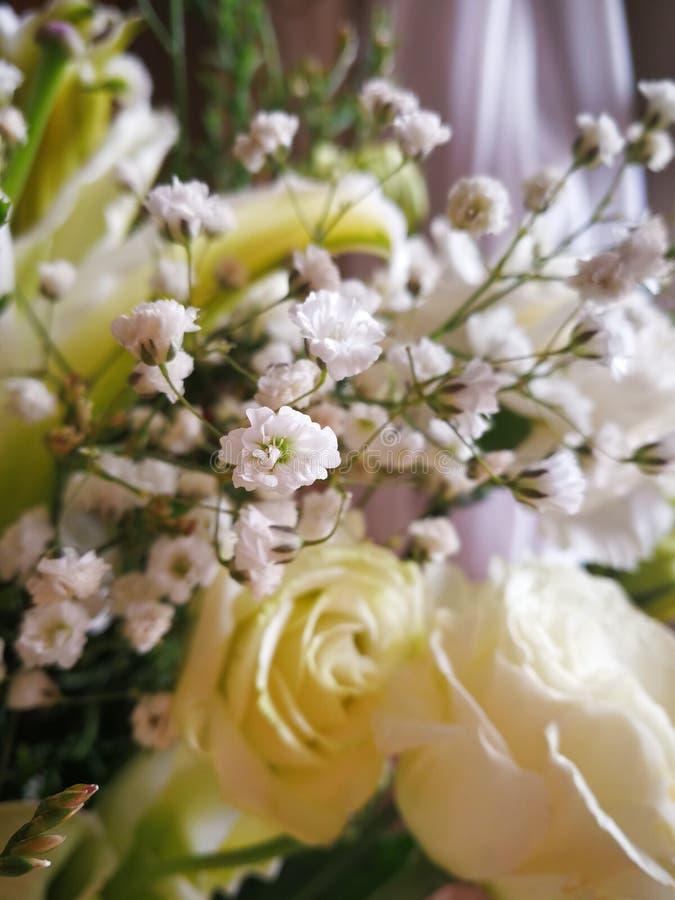 Ramo de Gypsophilas branco entre rosas e flor foto de stock royalty free