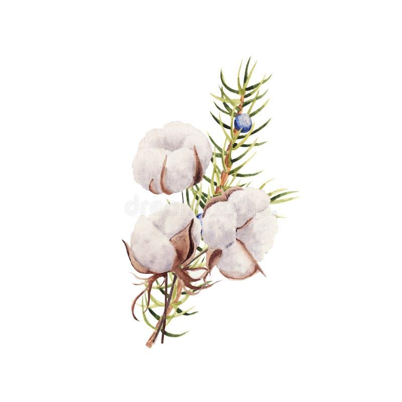 Ramo de invierno de color rojo con planta de algodón y enebro aislado en fondo blanco libre illustration