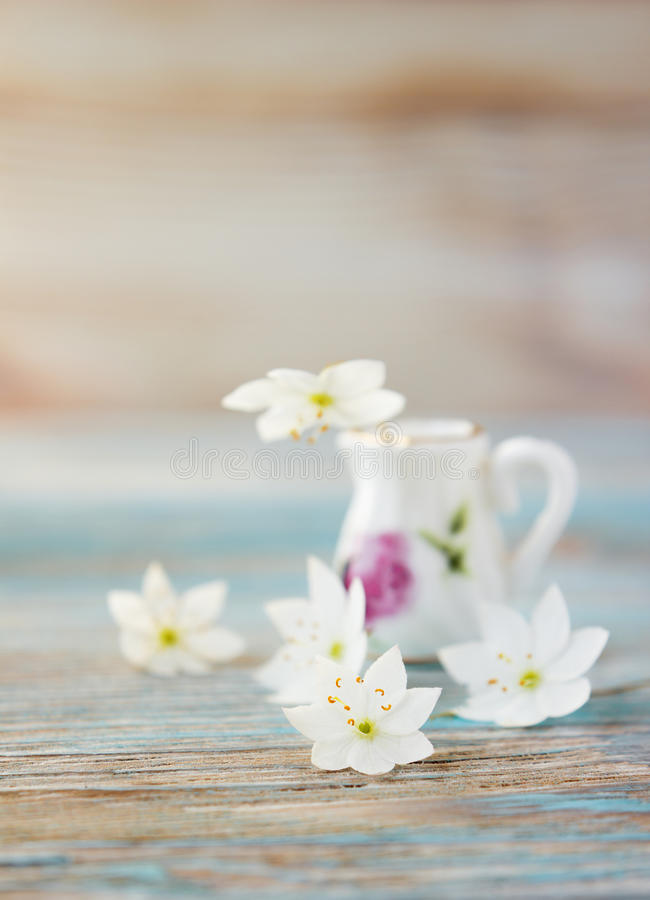 Ramo de la anémona, windflower en jarro imagenes de archivo