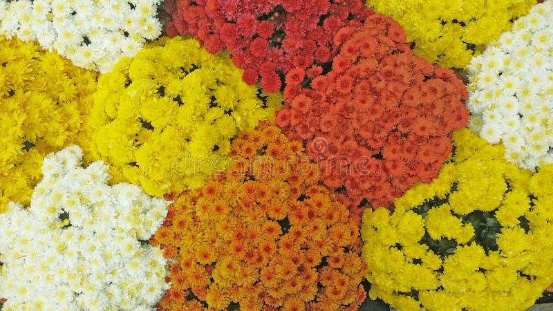Ramo de la caída de flores foto de archivo libre de regalías