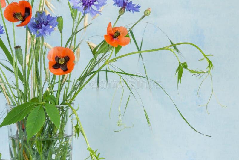 Ramo de la flor de la amapola, acianos, y planta salvaje de la uva con las hojas verdes en tronco en fondo azul del pueblo rústic fotos de archivo libres de regalías