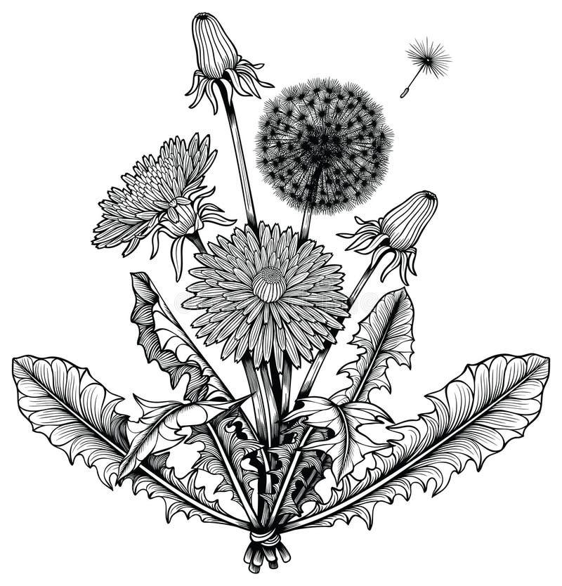 Ramo de la flor del diente de león ilustración del vector