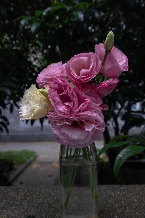 Ramo de la flor de flores de corte grandiflorum-frescas de Platycodon imagen de archivo libre de regalías