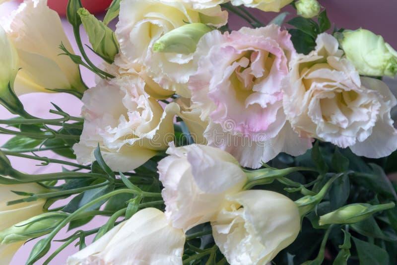 Ramo de la flor de flores de corte grandiflorum-frescas de Platycodon fotos de archivo libres de regalías