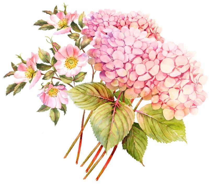 Ramo de la flor Hortensia y arbusto color de rosa en flor acuarela i stock de ilustración