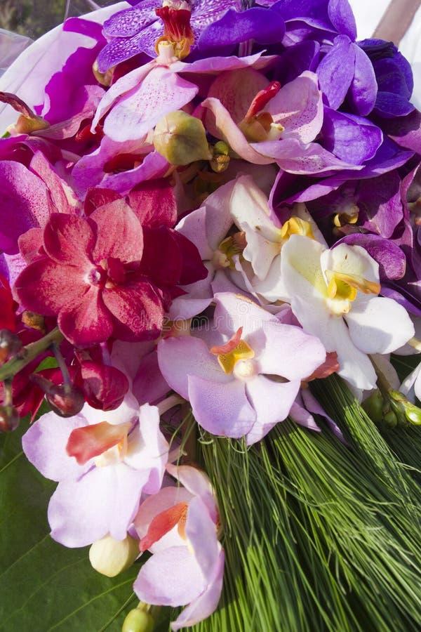 Ramo de la orquídea imágenes de archivo libres de regalías