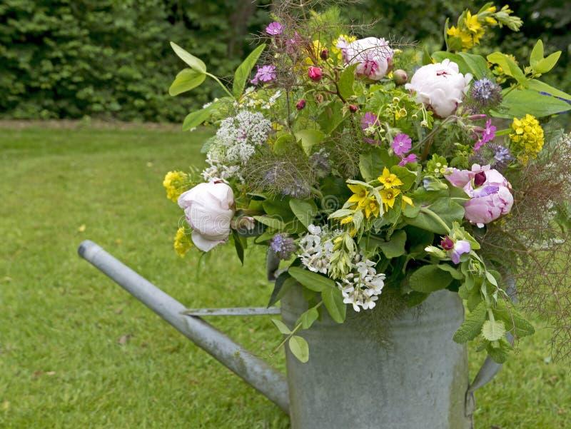 Ramo de la peonía en jardín fotografía de archivo libre de regalías