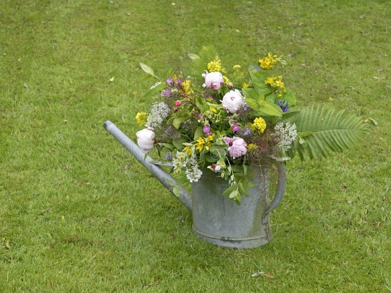 Ramo de la peonía en jardín foto de archivo