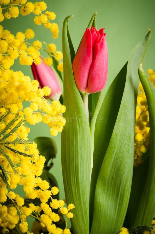 Ramo de la primavera con el tulipán y la mimosa fotografía de archivo