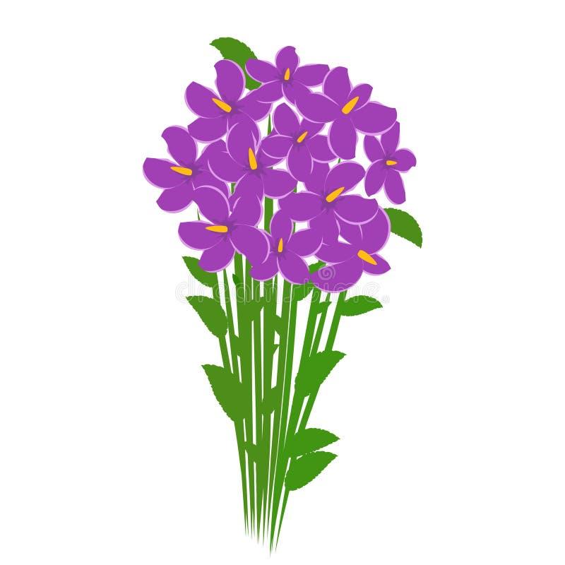 Ramo de la primavera de flores violetas de las azafranes aisladas en el fondo blanco Flores para el regalo de la mujer libre illustration