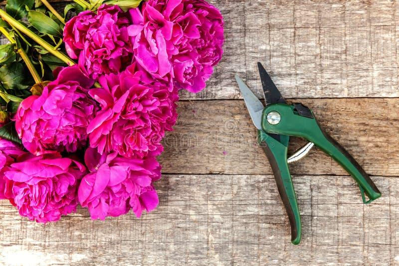 Ramo de las flores de la peonía y pruner magentas rosados frescos de los esquileos del utensilio de jardinería en fondo de madera imagen de archivo libre de regalías