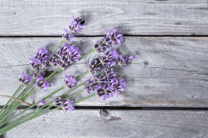 Ramo de lavandas púrpuras imagen de archivo libre de regalías
