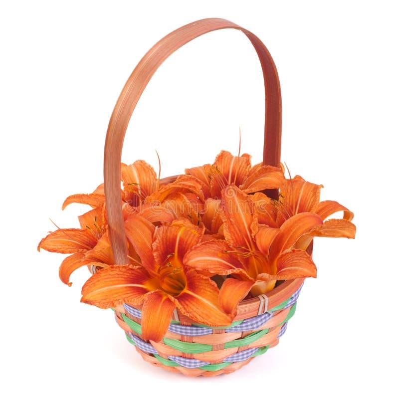 Ramo de lirios anaranjados en una cesta del regalo aislada imagen de archivo libre de regalías