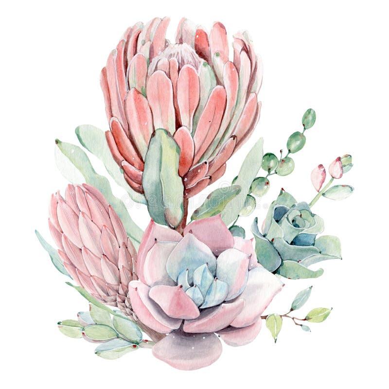 Ramo de los succulents del vintage de la acuarela ilustración del vector