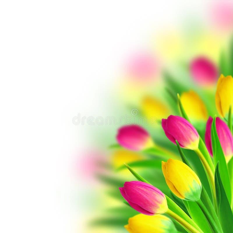 Ramo de los tulipanes fotos de archivo libres de regalías
