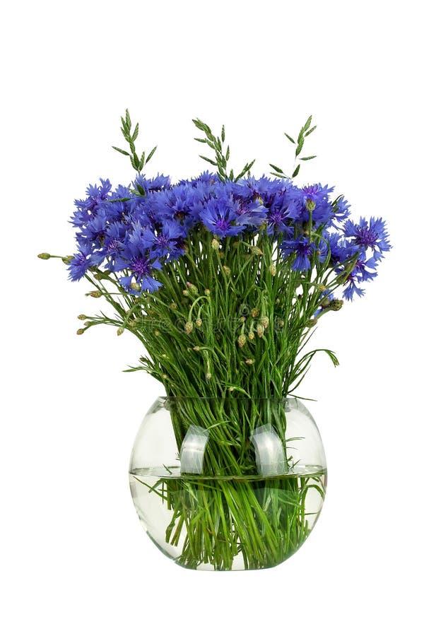 Ramo de los wildflowers - acianos en un florero de cristal aislado en el fondo blanco imágenes de archivo libres de regalías