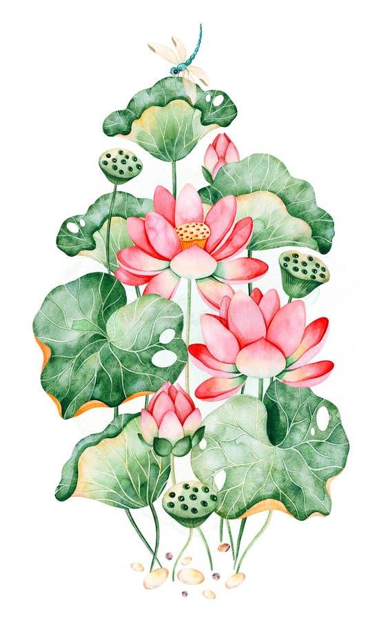 Ramo de Lotus en el fondo blanco con los lirios de agua y las libélulas stock de ilustración