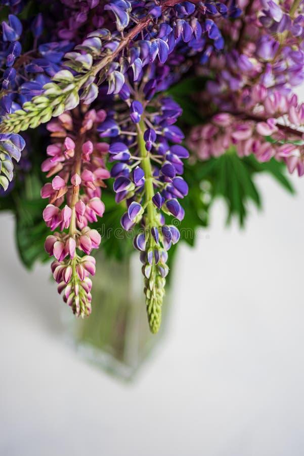 Ramo de lupines coloridos en un florero de cristal en blanco Copie el espacio fotografía de archivo libre de regalías