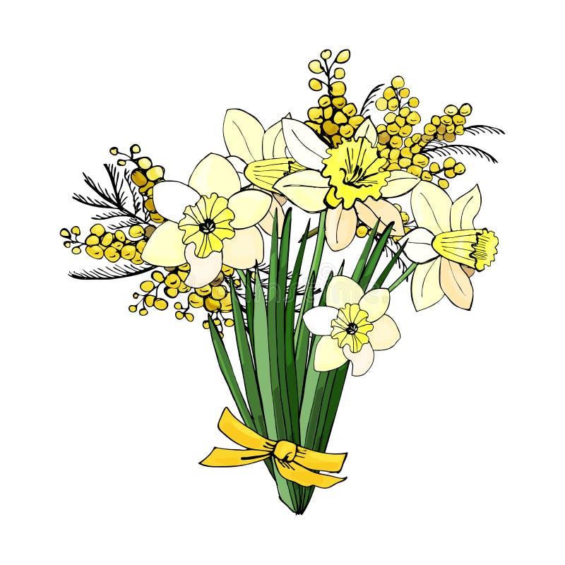 Ramo de narciso y de mimosa amarillos La mano dibujada coloreó bosquejo con las flores y las hojas aisladas en el fondo blanco libre illustration