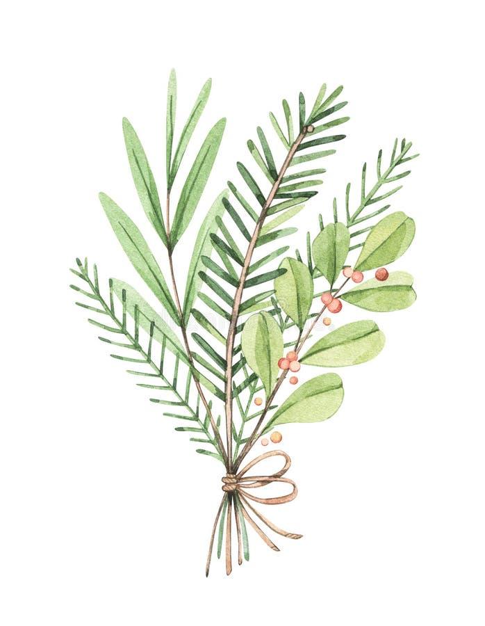 Ramo de Navidad con eucalipto, rama de abeto y hollín - Dibujo acuarela. Feliz año nuevo. Composición de vegetación de inviern ilustración del vector