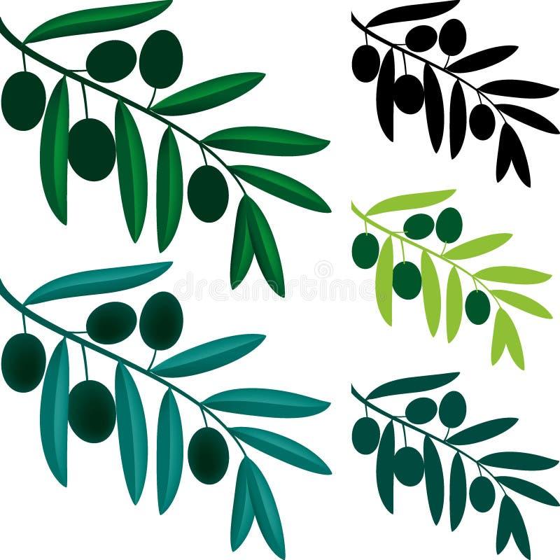Ramo de oliveira ilustração stock