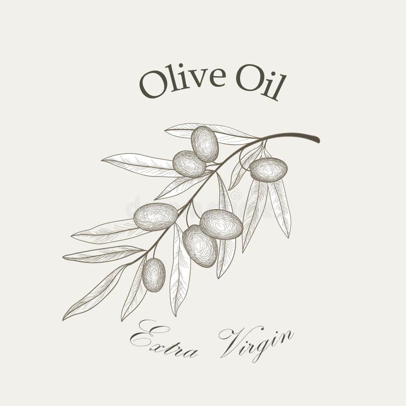 Ramo de oliveira com esboço isolado azeitonas ilustração do vetor