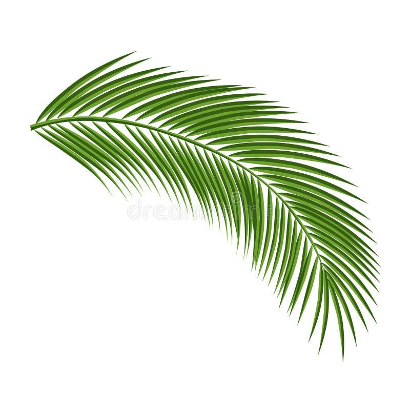 Ramo de palmeira isolado em um fundo branco ilustração do vetor