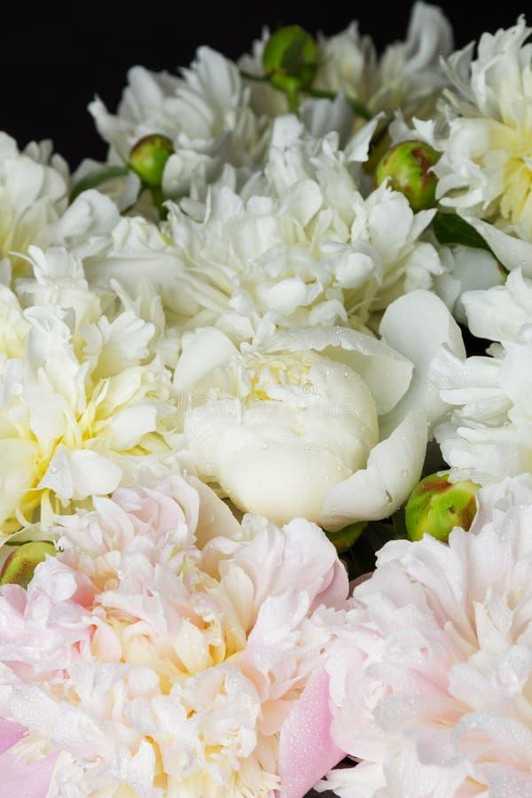 Ramo de peonías rosadas y blancas foto de archivo libre de regalías