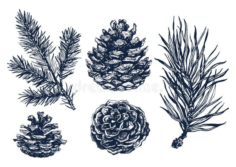 Ramo de pinheiro tirado mão ilustração royalty free