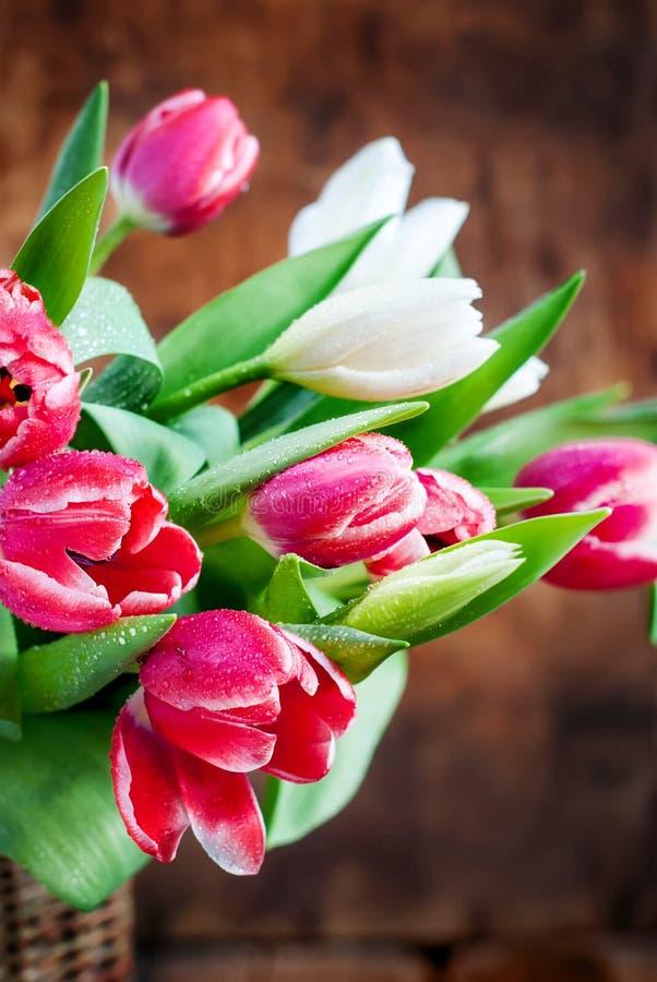 Ramo de rosa fresco de la primavera, tulipanes blancos fotografía de archivo libre de regalías