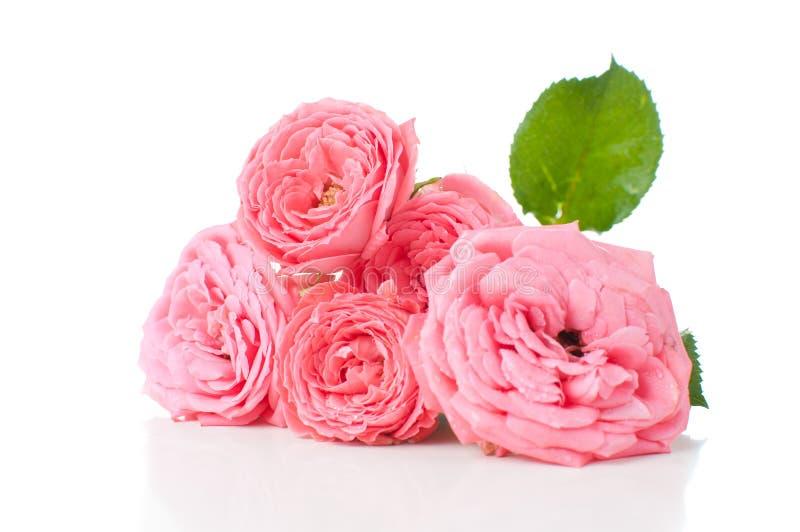 Ramo de rosas cor-de-rosa fotos de stock