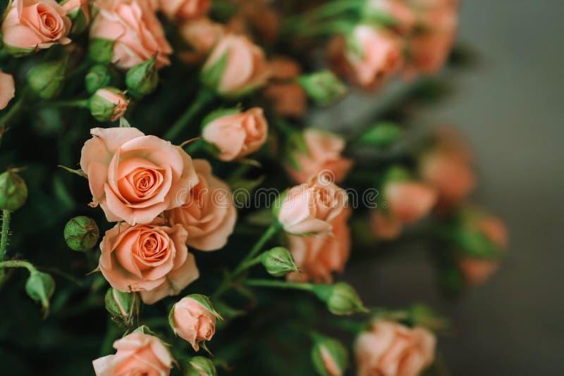 Ramo de rosas del color coralino en un fondo azul fotos de archivo libres de regalías