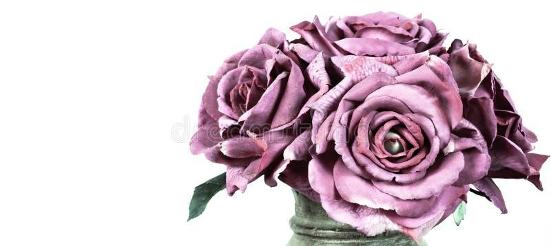 Ramo de rosas púrpuras en blanco imágenes de archivo libres de regalías