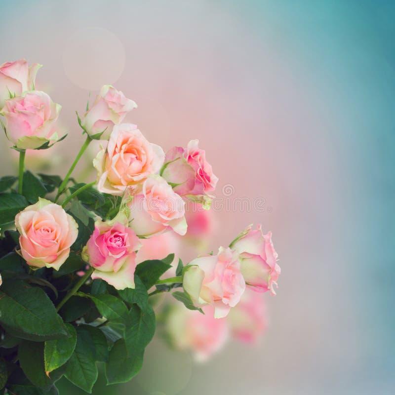 Ramo de rosas rosadas imagenes de archivo