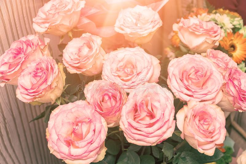 Ramo de rosas rosadas delicadas hermosas en la luz del sol imagen de archivo libre de regalías