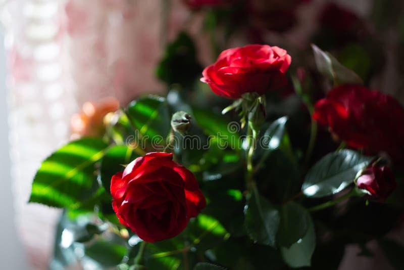 Ramo de rosas salvajes rojas imagen de archivo libre de regalías
