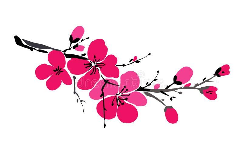 Ramo de Sakura isolado no fundo branco Fundo da mola Flor de cereja japonesa Maçã de florescência fl ilustração royalty free