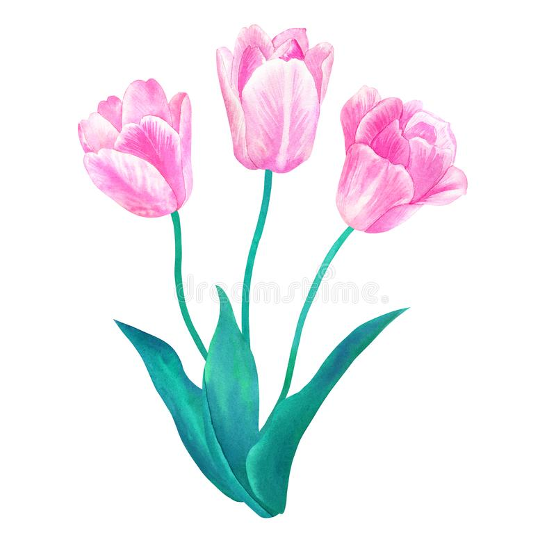 Ramo de tres tulipanes rosados con las hojas verdes en colores en colores pastel Ejemplo dibujado mano de la acuarela Aislado en  ilustración del vector