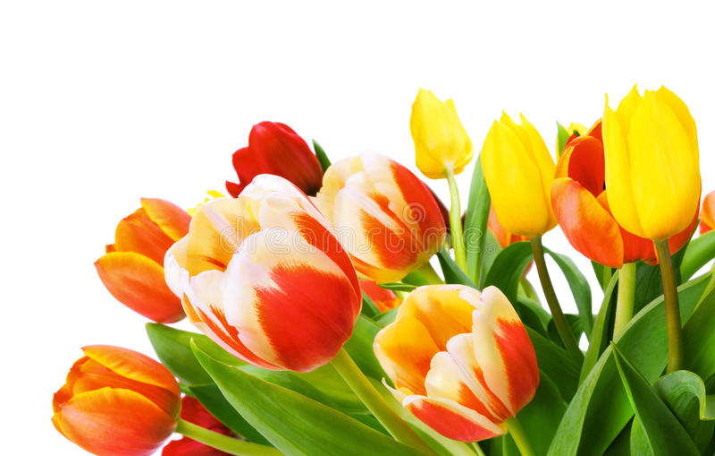 Ramo de tulipanes aislados en blanco imagen de archivo