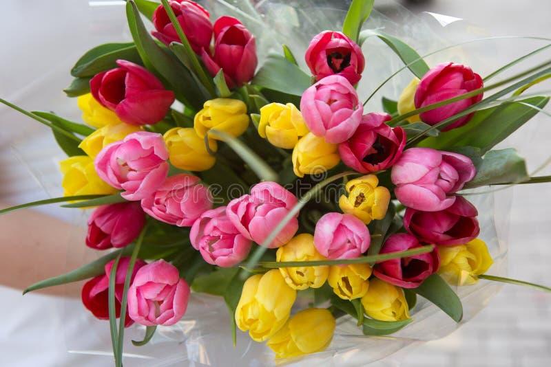 Ramo de tulipanes en las manos de la muchacha Muchos rojos, rosa, tulipanes amarillos fotos de archivo libres de regalías