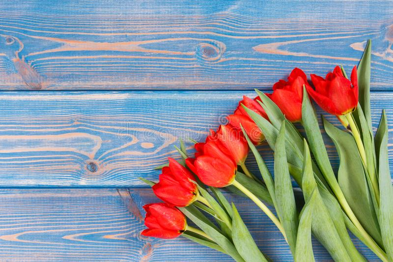 Ramo de tulipanes frescos en tableros azules, espacio de la copia para el texto foto de archivo libre de regalías
