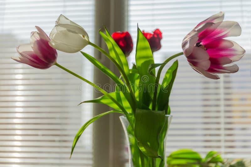 Ramo de tulipanes multicolores en florero contra ventana fotos de archivo