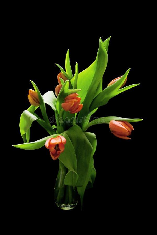 Ramo de tulipanes rojos imagen de archivo