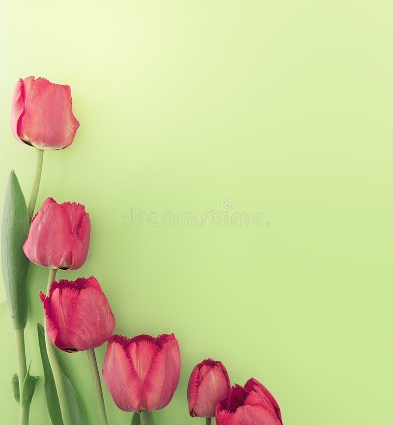 Ramo de tulipanes rojos en fondo verde con el espacio imágenes de archivo libres de regalías