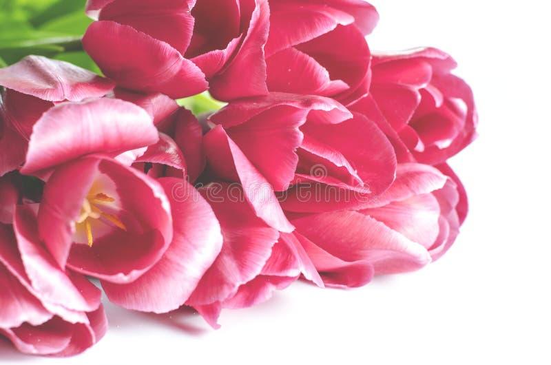 Ramo de tulipanes rosados en un fondo ligero Tarjeta del día de fiesta imagen de archivo libre de regalías