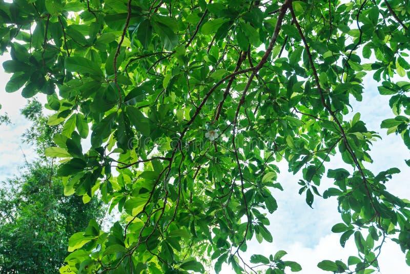 Ramo de uma árvore imagem de stock