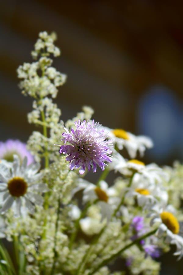 Ramo de wildflowers foto de archivo libre de regalías