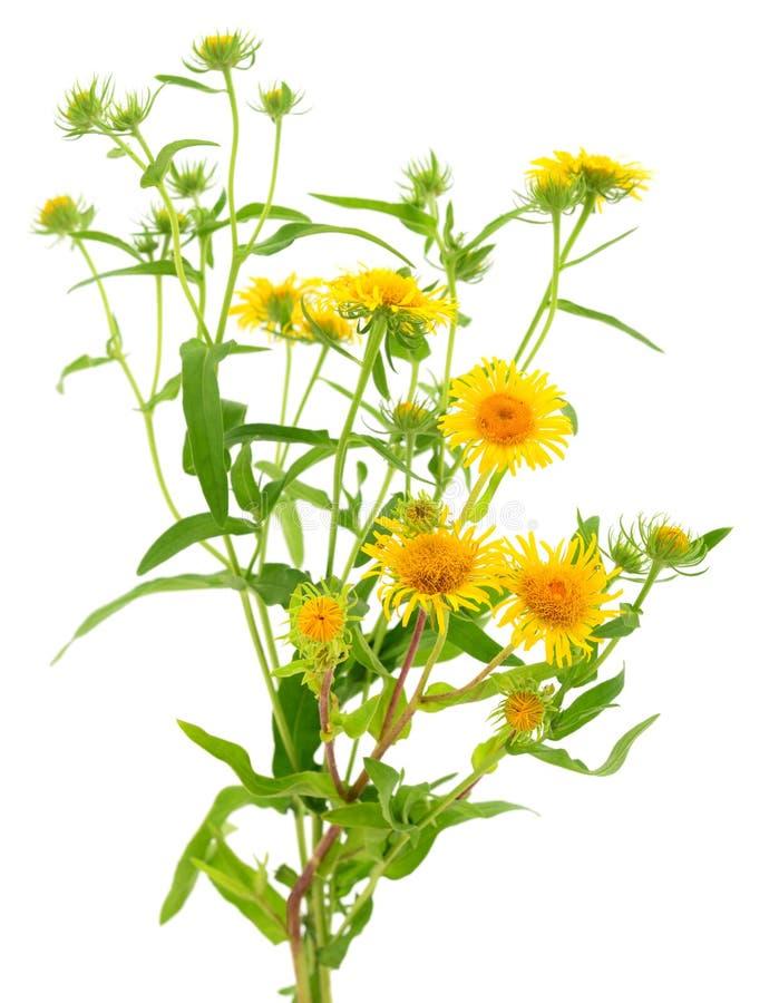 Ramo de wildflowers amarillos imagen de archivo libre de regalías