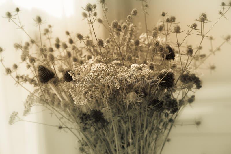 Ramo de wildflowers secados con el estilo retro del vintage del efecto del filtro, foco suave y empañado, imágenes de archivo libres de regalías